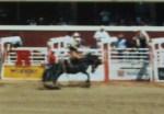 Buck Horse 1