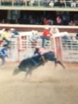 Bull Ride 1