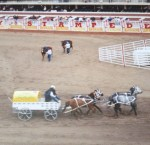 Wagon Race 3